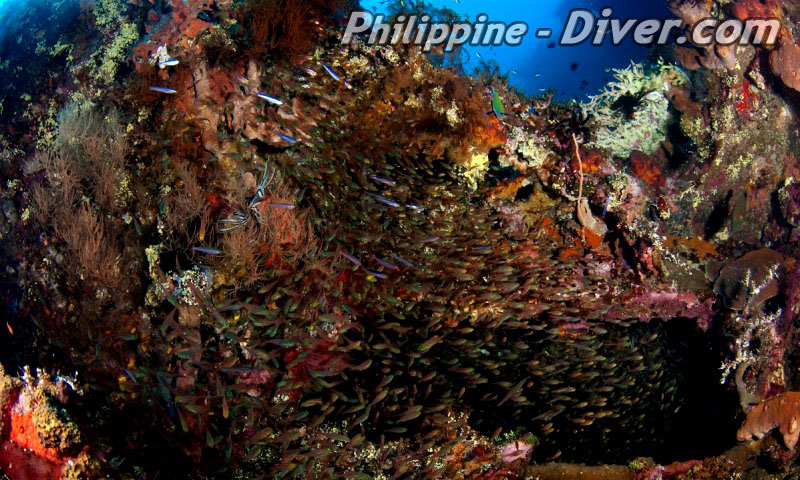 colorful-reef-philippines