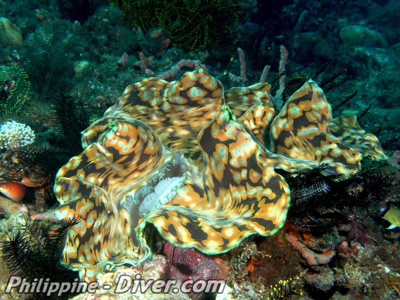 diving in puerto-galera