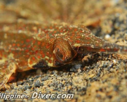 dragonet-dumaguete-philippines