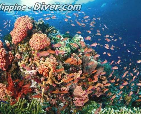 tubbataha-reef-corals-philippines