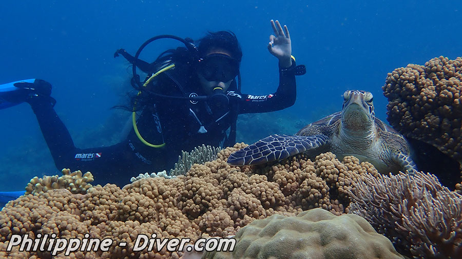 Diving in Apo Island - Dive Site - Chapel Point