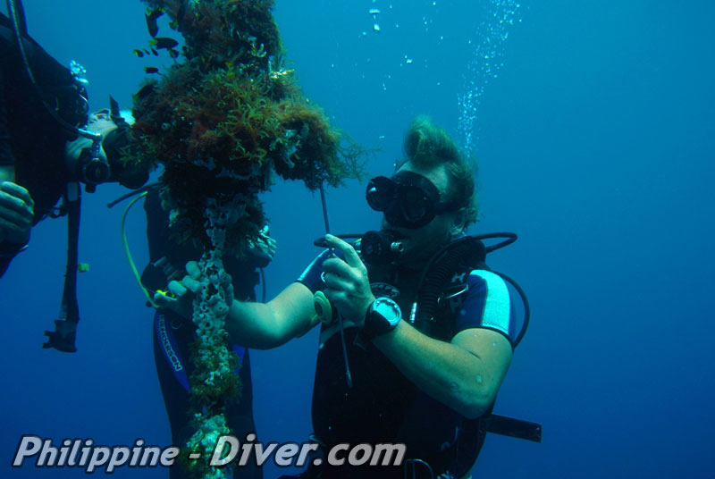 Diving in Dumaguete - Philippines