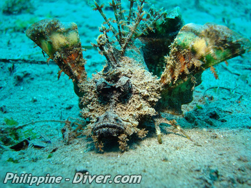 spiney-devilfish