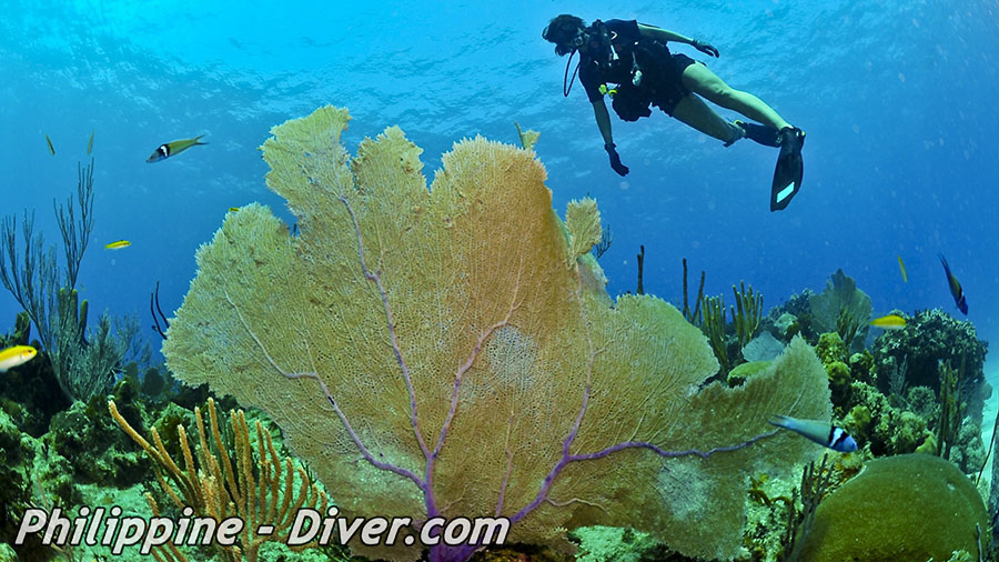Dive Sites in Siquijor