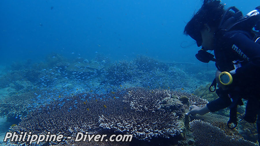 Diving in Apo Island - Dive Site - Largahan