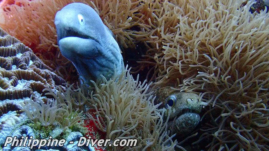 Diving in Apo Island - Katipanan